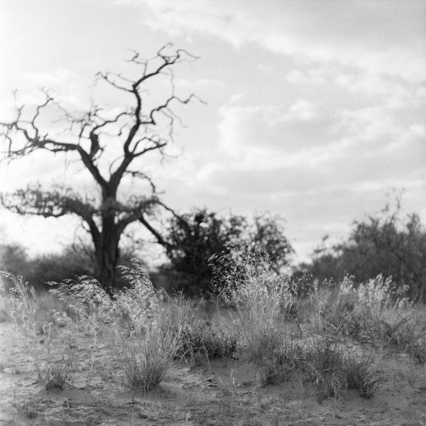 Kalahari2