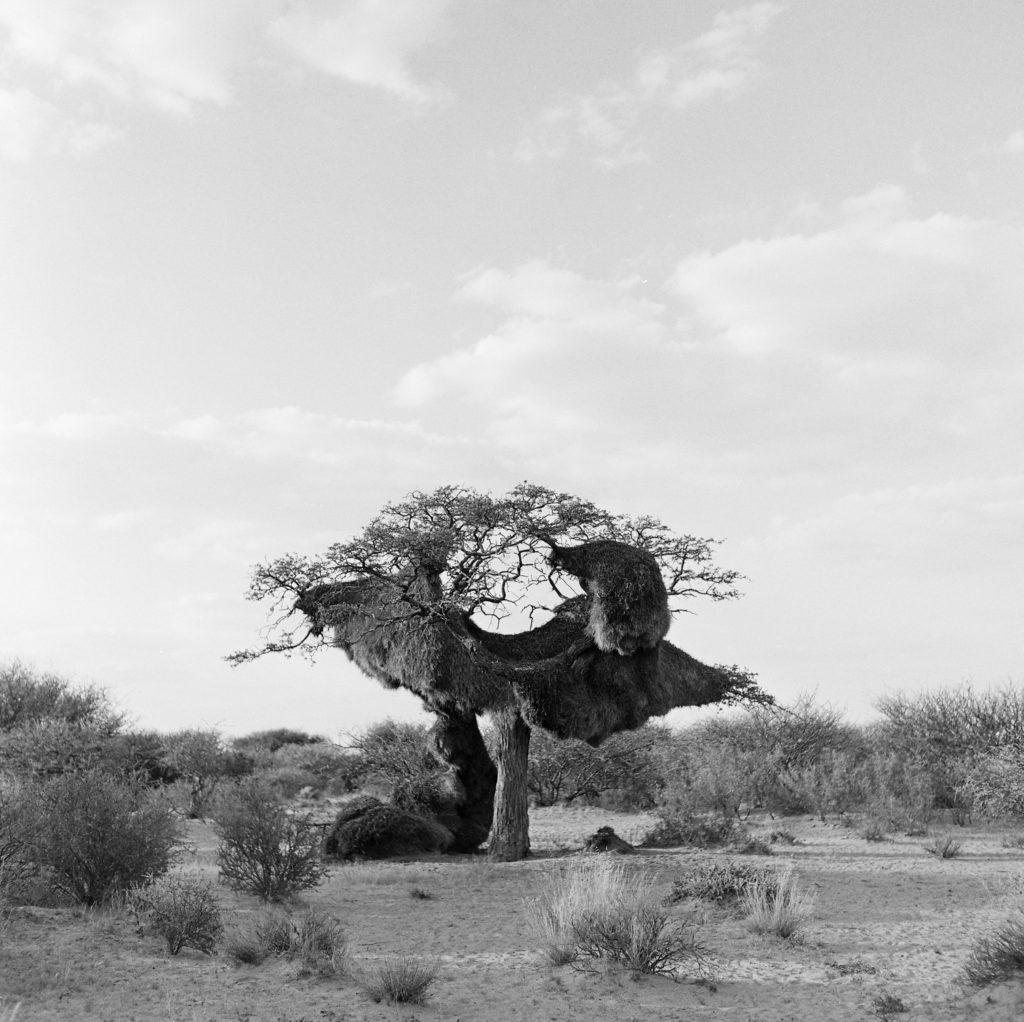 Kalahari3