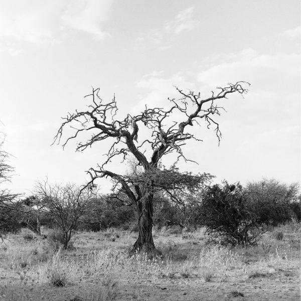 Kalahari4